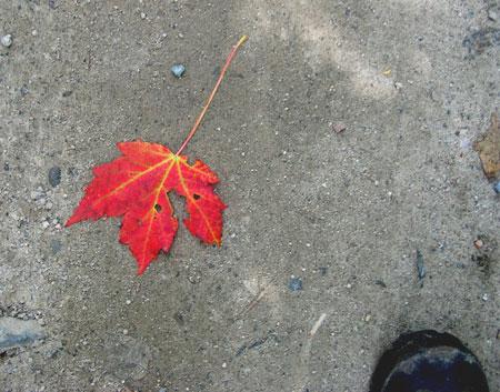 Boot_leaf