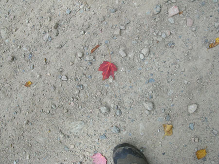 Leaf_and_boot1